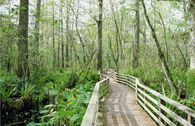Bridge through Corkscrew Swamp Wildlife Sanctuary, Florida, USA