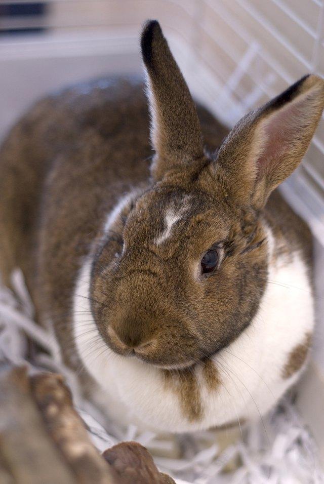 Pet rabbit in cage
