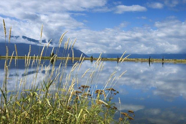 Grass reeds near lake, Idaho