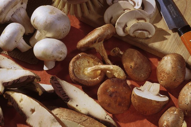 Assorted mushrooms for cooking