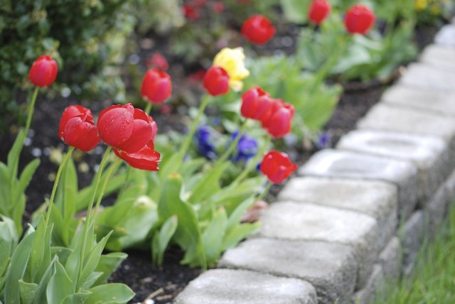 Tulips in a landscaped garden