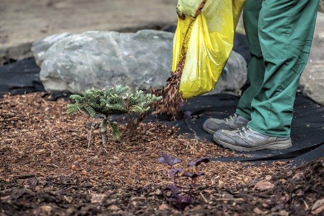 Gardener spills mulch under bush