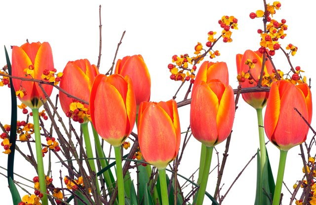 Which Flowers Mean Family Hunker
