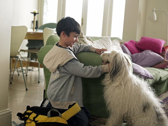 Boy stroking dog