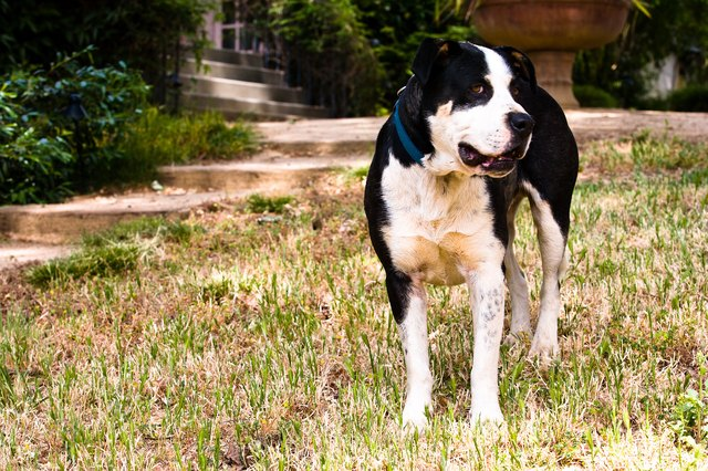 Dog standing in yard