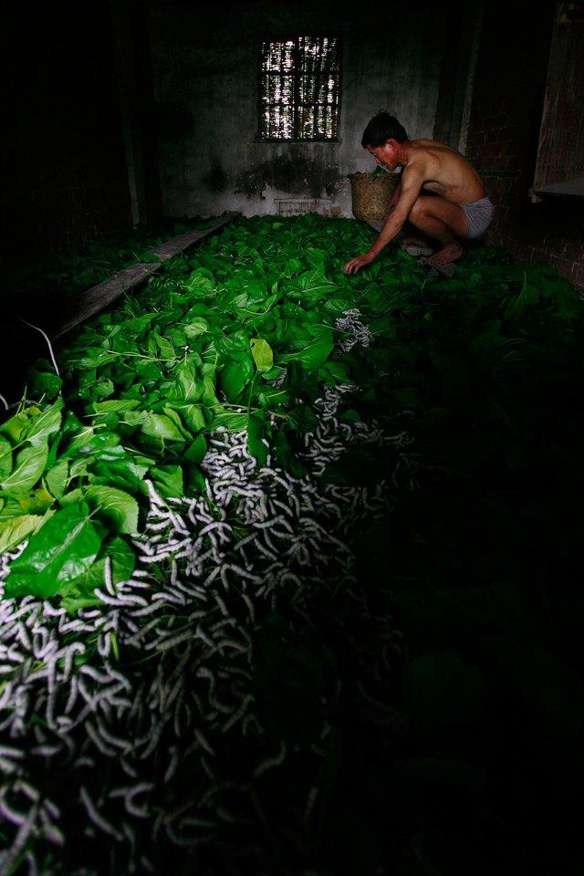 Farmers Produce Silk In China