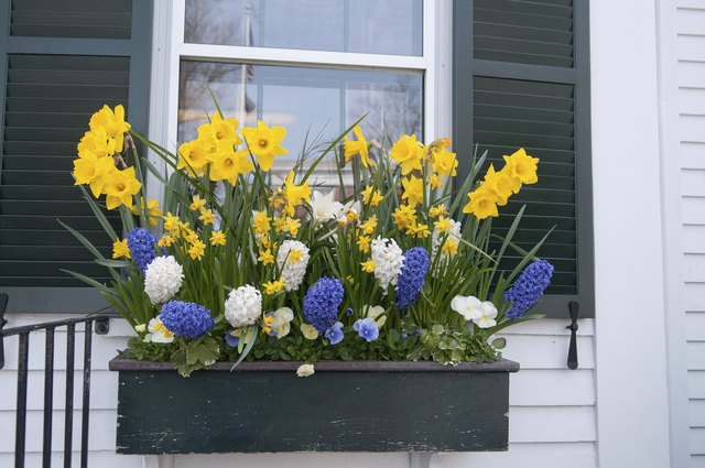 Window box of spring flowers