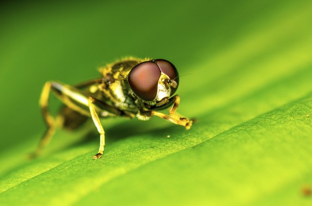 how to get rid of grass flies