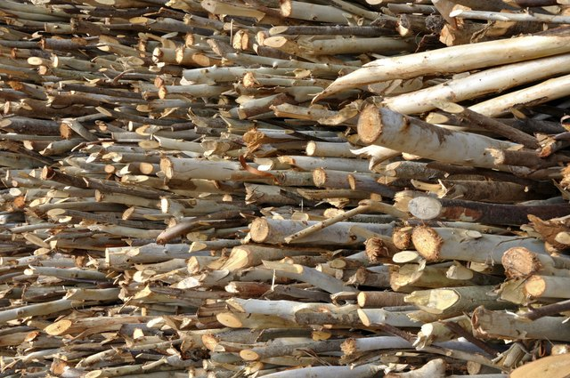 Pile of firewood Eucalyptus