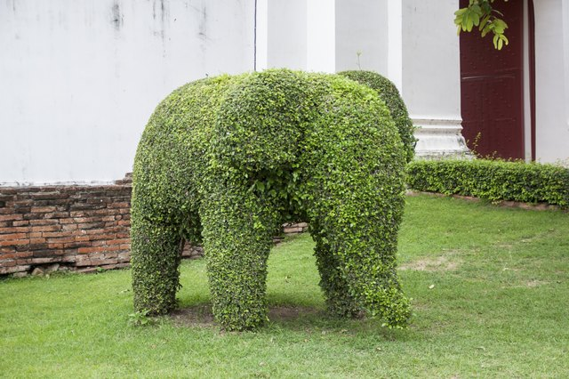 Elephant shaped tree