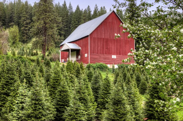 Red barn and green trees.