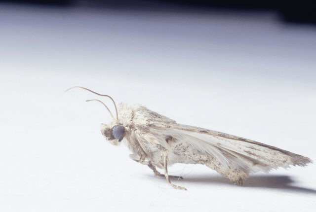 How to Repair Moth Damaged Clothing | Hunker