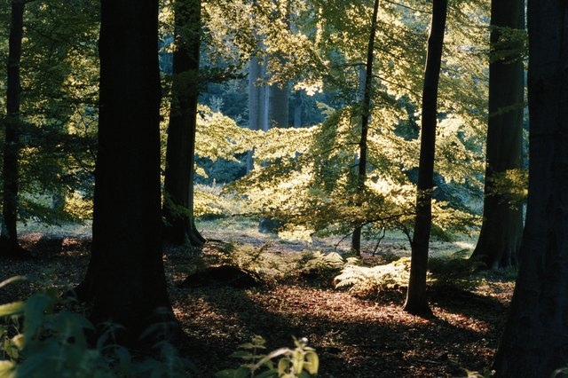 Trees in forest, autumn