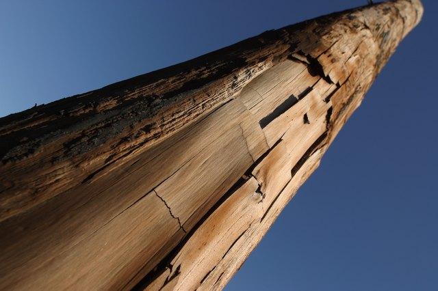 Tall tree trunk with peeling bark