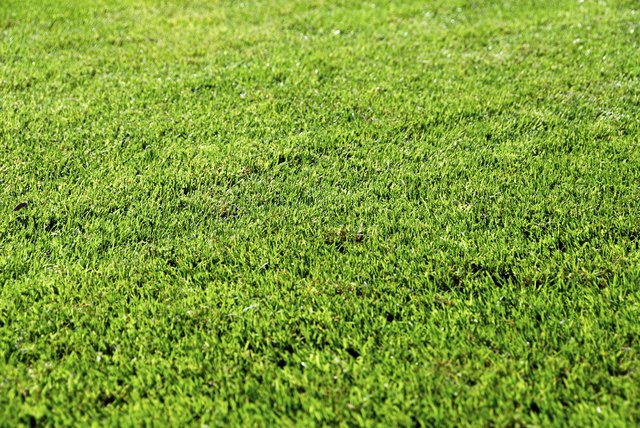 Close-crppped Lawn