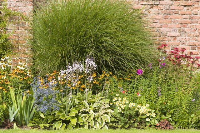 old herbaceous garden with wall background