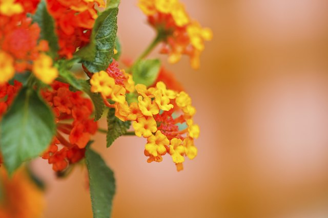 The Best Perennials For Texas Hunker