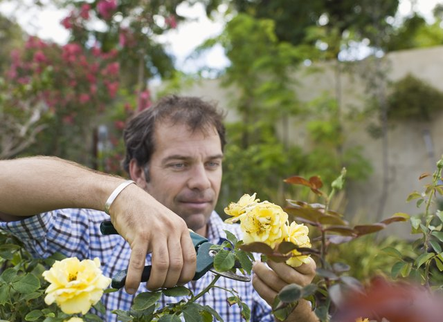 Man cutting flowers with shears