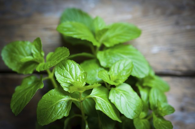 Fresh mint on rustic wooden background