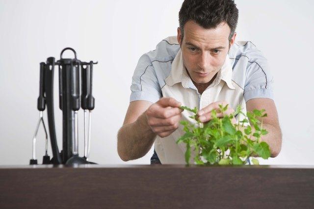 Man picking mint leaf in the kitchen