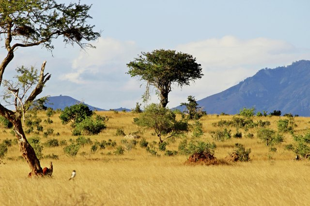 Types Of Trees Grass Shrubs In The Savanna on Grassland Ecosystem