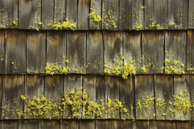 How to Mix Zinc Sulfate Powder to Kill Moss | Hunker