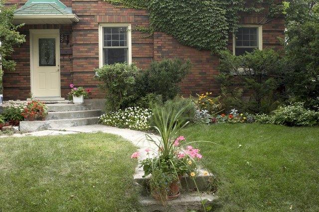 Suburban yard with walkway