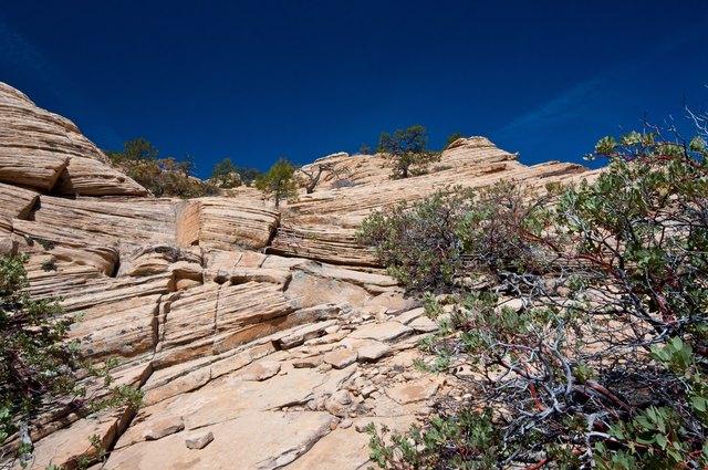 Abstract Sandstone and Manzanita