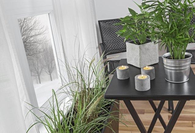 Winter landscape behind the window, green plants indoors