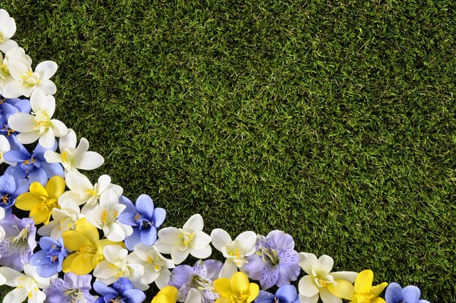 Spring or summer background