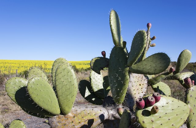What Eats a Cactus? | Hunker