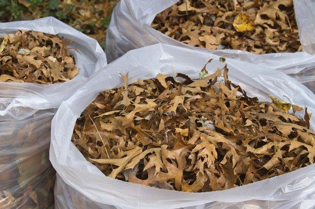 Overflowing Bags of Autumn Oak Tree Leaves