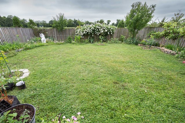 Tips on Reseeding a Lawn | Hunker
