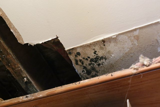 Do it yourself mold remediation with boric acid hunker to avoid such expense use a solution of boric acid to kill and wipe away the mold if it has not penetrated too deeply solutioingenieria Images