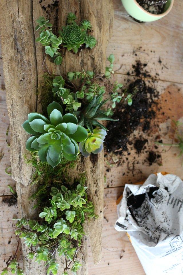 Place succulents along wood.
