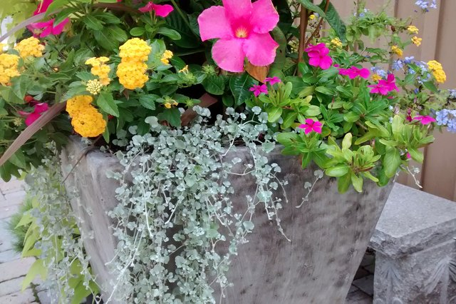 What to Put in the Bottom of a Large Planter | Hunker