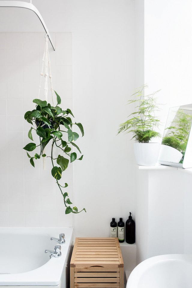 White bathroom with two plants, one hanging