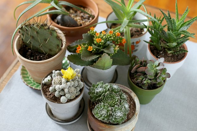 Succulents & Cacti - cover