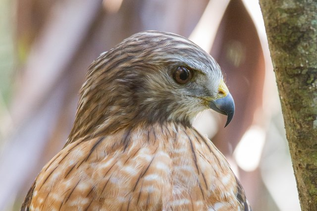 How to Get Rid of Hawks | Hunker