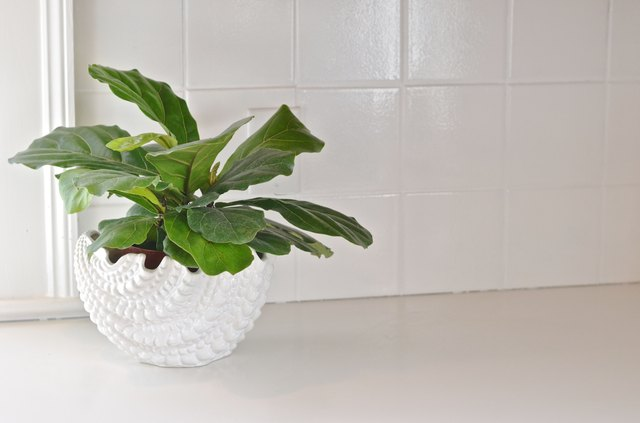 painted kitchen tile behind plant