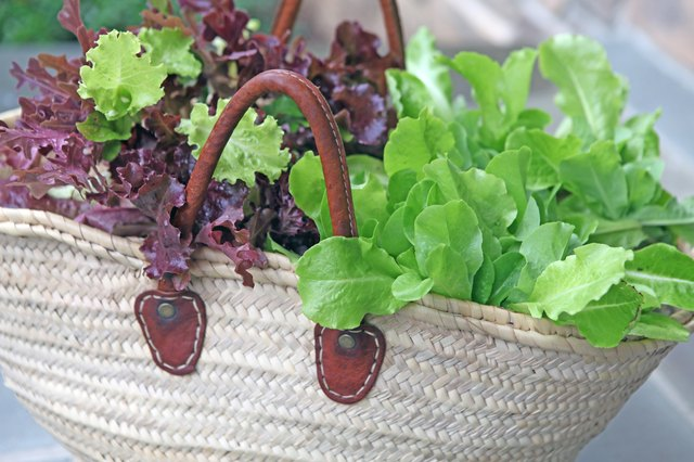 How to cut lettuce so it keeps growing hunker - How to store lettuce from garden ...