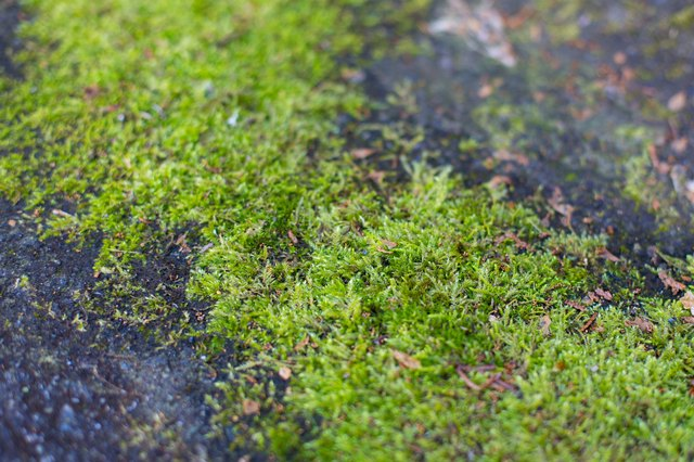 How To Use Tide Detergent For Moss Removal Hunker