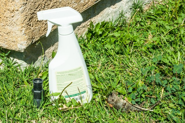 Homemade Rat and Mice Spray Repellent   Hunker
