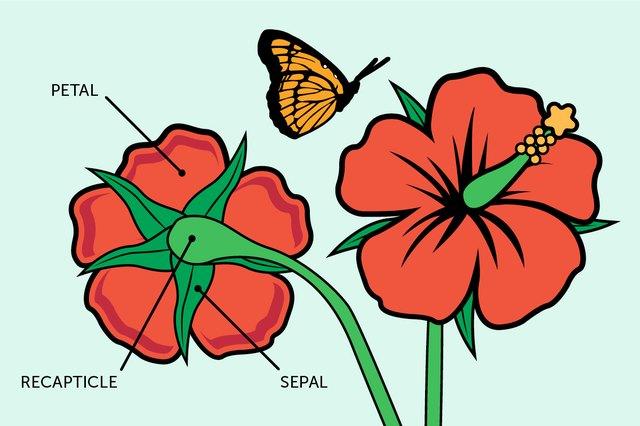 Plant reproductive system   Britannica.com