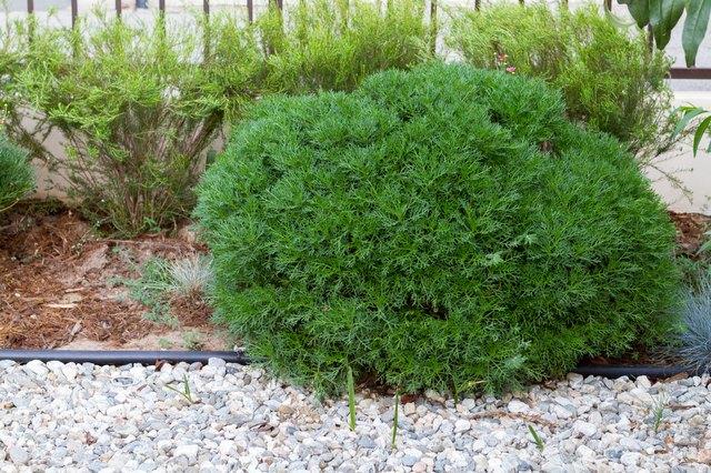 Homemade Bush Root Killer | Hunker