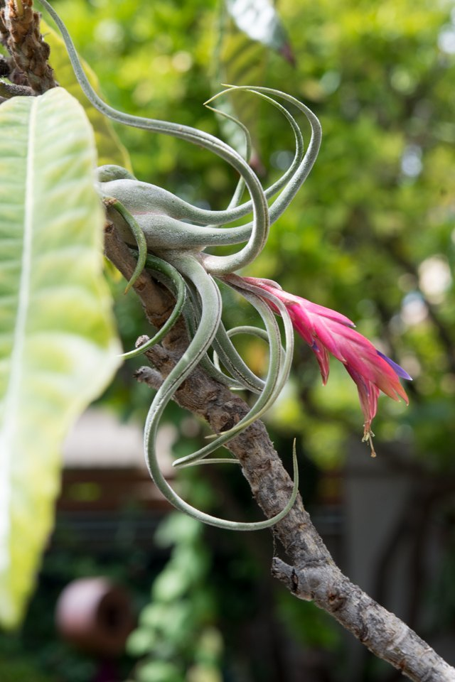Air plants placed on trees.