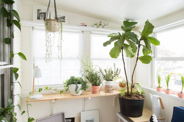 green verdant plant life