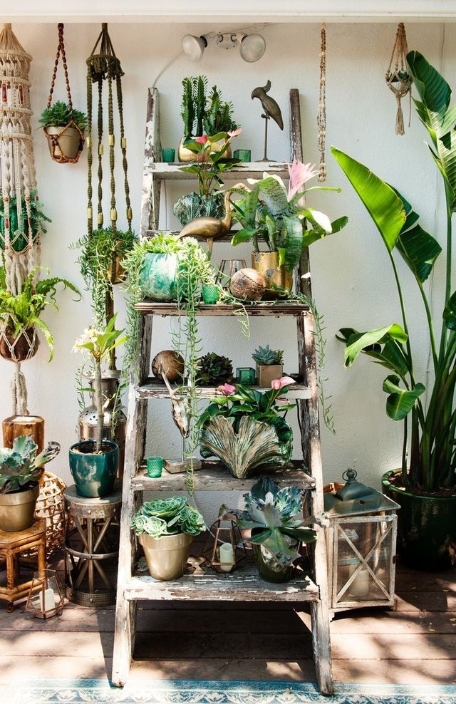 potted plants on ladder garden
