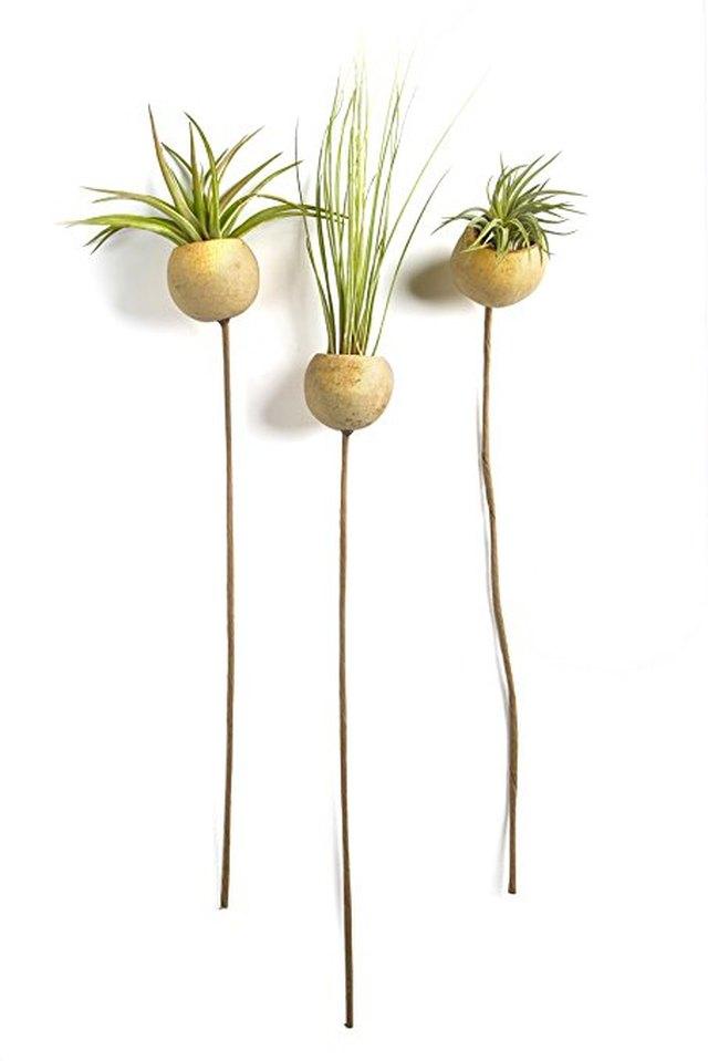 plant pods