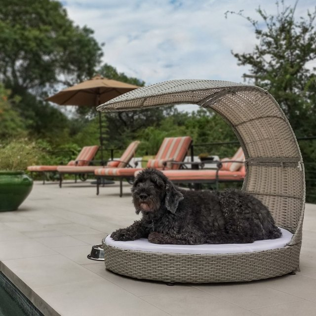 dog chaise lounge
